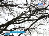 Станцию юных натуралистов на полуострове Мюллюсаари могут закрыть